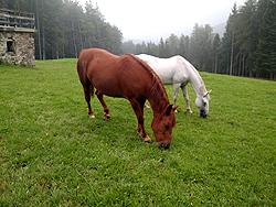 I verdi pascoli sul Pohorje, Klopni vrh
