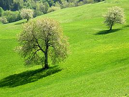 L'altipiano della Bainsizza in primavera