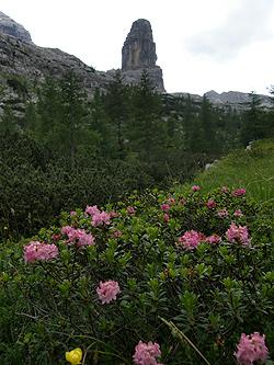 Rododendri alle pendici della Torre dei Sabbioni