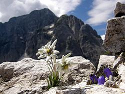 Stelle alpine e Jòf di Montasio