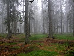 Le foreste del Pohorje