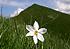 Monte Golica