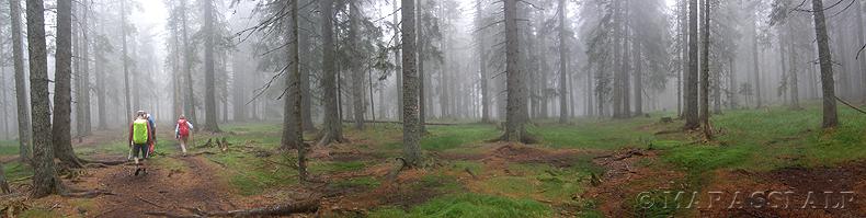 La misteriosa e tenebrosa foresta di Pohorje